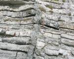 paleocene-micrites-with-greensand-dyke_te-kaukau-pt_wairarapa